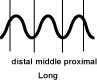 The Long Pulse